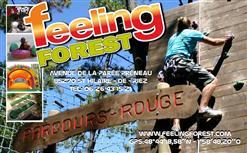 245920_feeling_forest