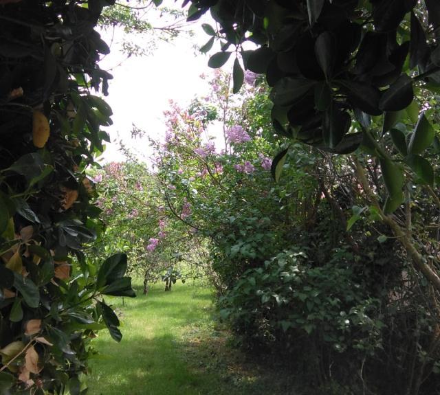 Jardin Gîte La Cibulle