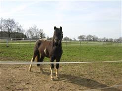 centre-equestre-equiplus-saint-martin-des-noyers-85-asc-1